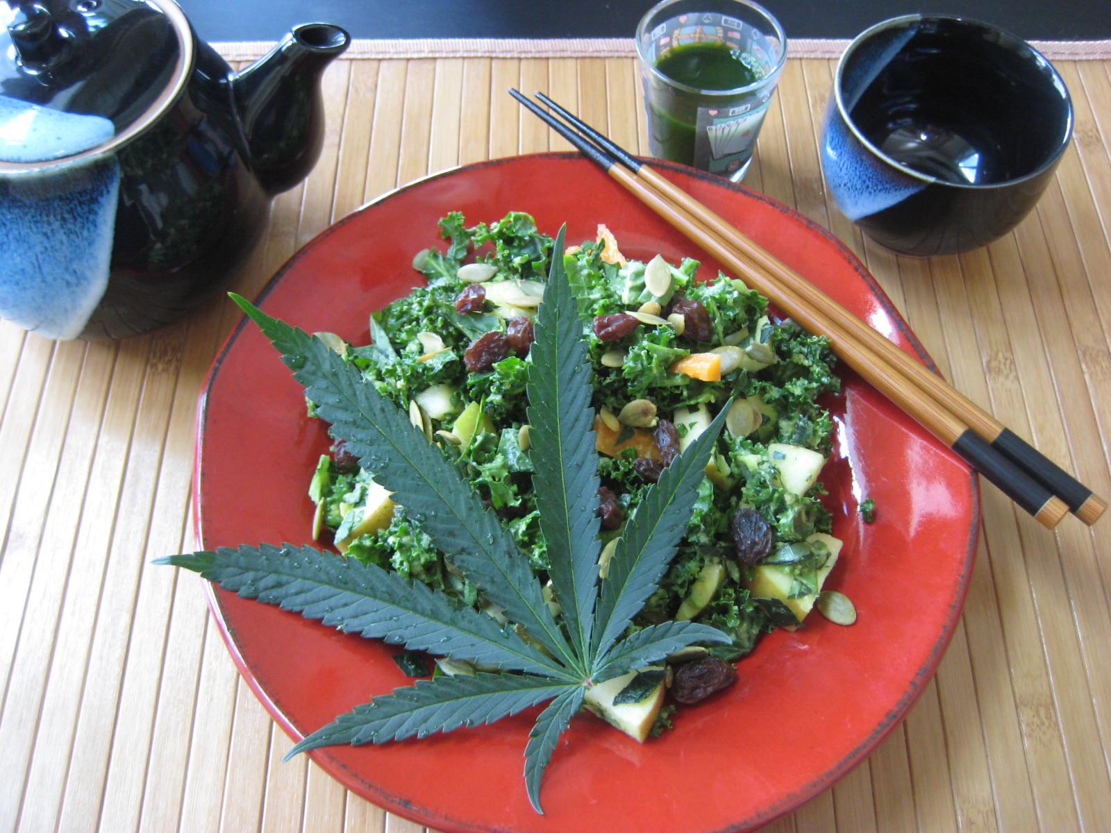Приготовить салат из конопли оборудование для производства целлюлозы из конопли